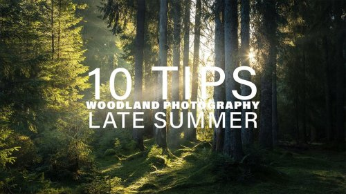 10 tips for late summer and early autumn woodland photography - DIY Photography