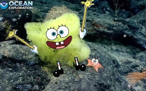 Underwater camera captures real-life SpongeBob and Patrick - DIY Photography