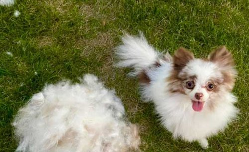 Top 6 Superior Choices of The Best Shampoo for Dogs That Shed