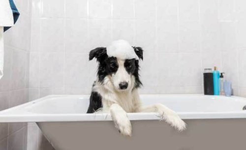 Must Read! Tips on How To Give A Dog A Bath In The Bathtub