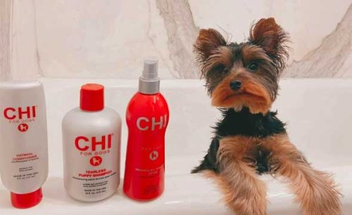 Sort Out Top 7 Suggestions What Is the Best Shampoo for a Puppy