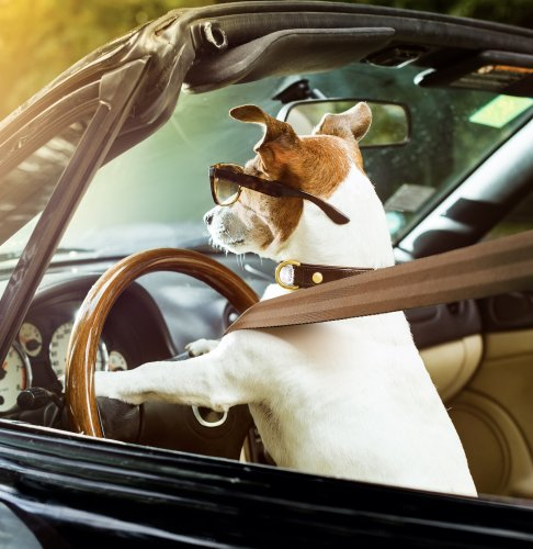 A Dog's Tips On Traveling More Mindfully On Road Trips