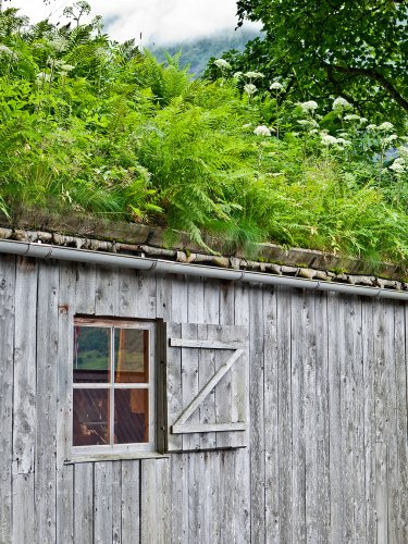 A Low-Maintenance Garden Idea, Straight From the Netherlands