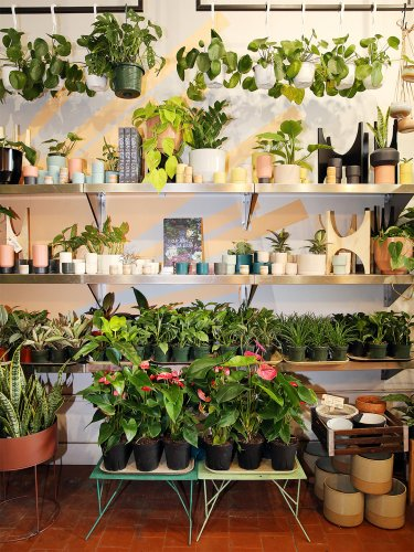 Which Houseplant You Should Buy, According to Your Zodiac Sign