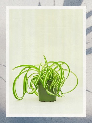 The Best Low-Light Indoor Plants Can Handle Any Shady Situation