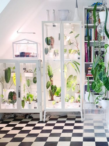 This IKEA Staple Moonlights as a Greenhouse