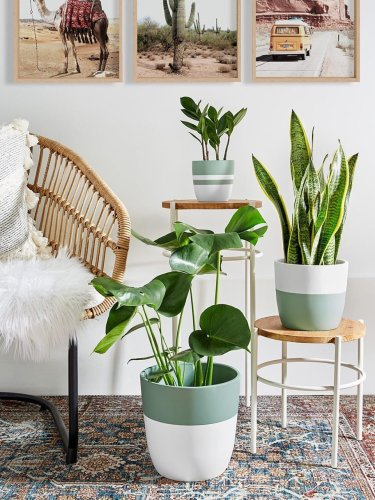 If You're Straight-Up Forgetful, the Snake Plant Was Made for You