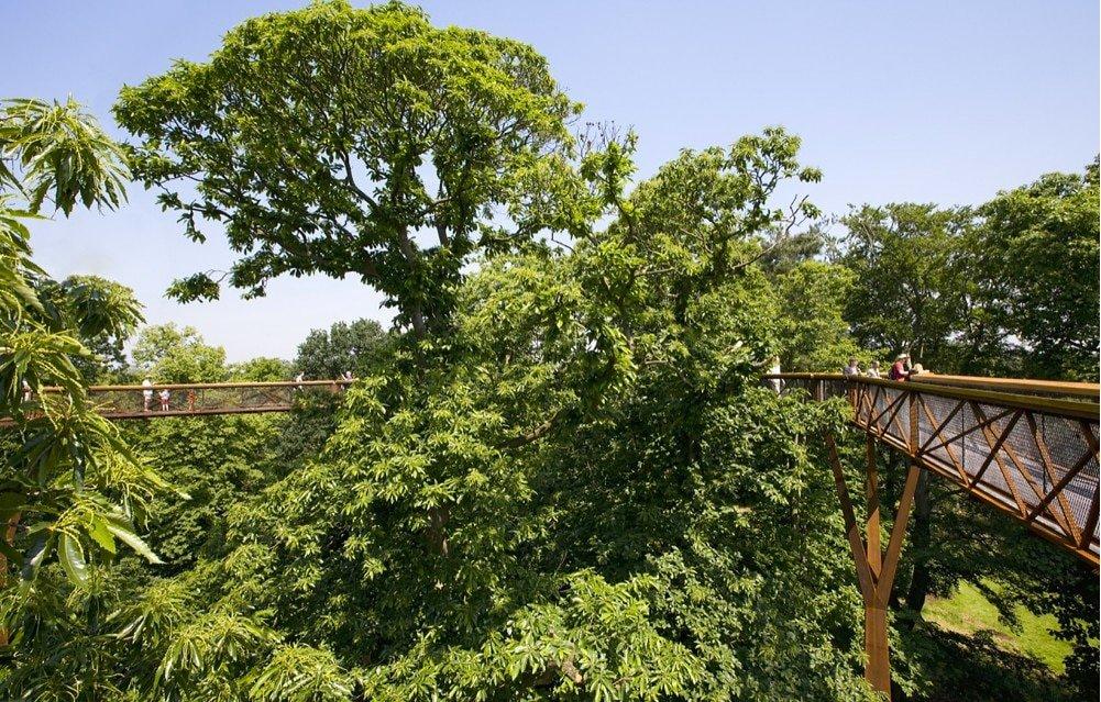 Kew Tree Top Walkway & Rhizotron - Loves Domusweb