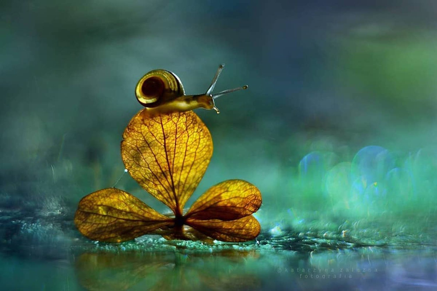 Incredible Macro Photos of Snails Reveal Tiny Worlds