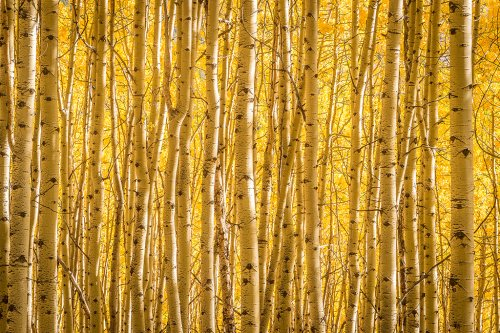Use Pattern And Repetition For More Compelling Compositions