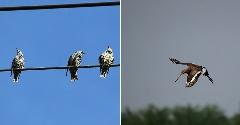 Discover migratory birds