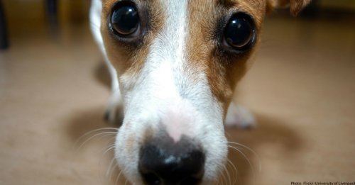 Anxiety In Dogs: How To Calm Your Anxious Dog (And Improve His Bad Behavior)