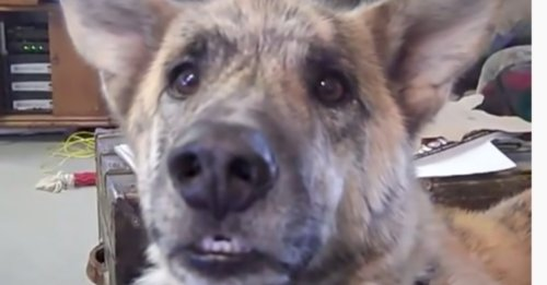 Owner Tells Dog He Gave All The Treats To The Cats, Over 200M Have Seen His Hysterical Reply