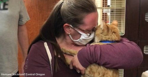 Rescued Cats Defy The Odds To Escape Deadly Wildfires