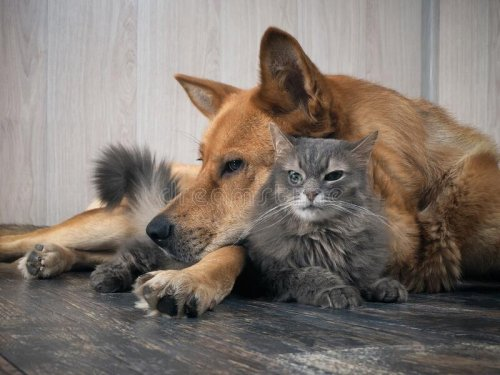 43 of the World's Largest Dog and Cat Breeds You'll Love