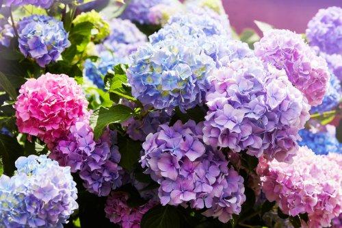 The best perennial flowers that bloom all summer | 21Oak