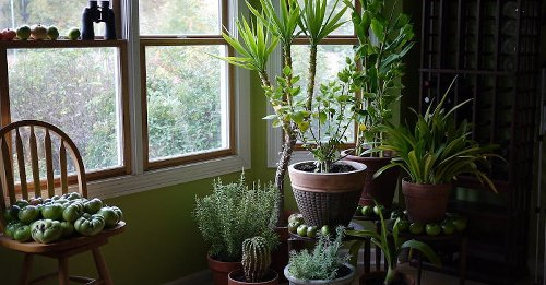 The 9 Best Indoor Plants To Buy in 2021 | The Manual