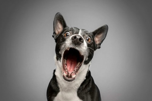 7 easy tips to calm an overexcited dog every time | PawTracks