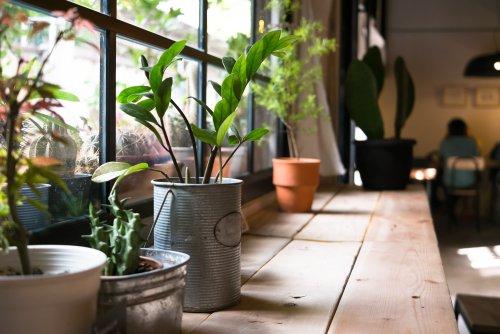 6 Low-maintenance Indoor Plants That Can Survive All Season | 21Oak