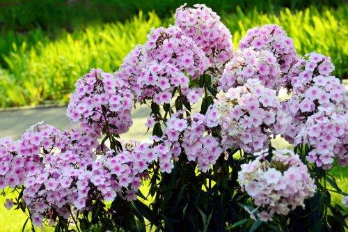 6 kinds of perennials that bloom all summer for a gorgeous garden | 21Oak