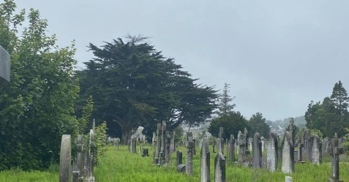Grieving Dubs unable to visit loved ones as giant invasive weeds engulf graves