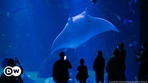 Begegnungen mit Mantarochen: Europas größtes Aquarium