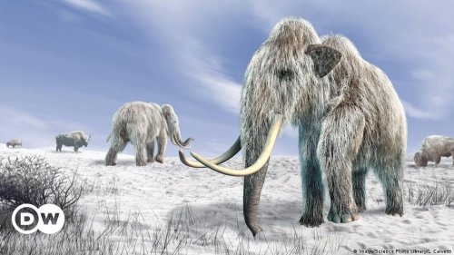 Biotech firm says it can resurrect extinct woolly mammoth