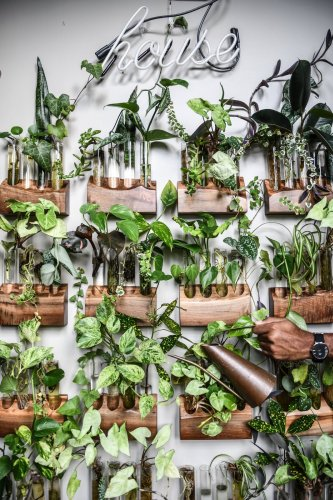 The Beginner's Guide to Propagating Houseplants