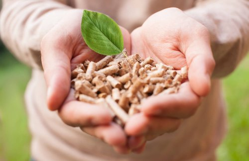 What Is Biomass Energy and How Can It Be Used? - Earthava