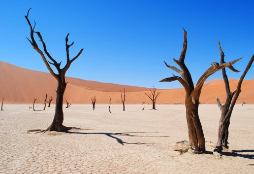 Desertification and land degradation threaten global well-being | Earth Day