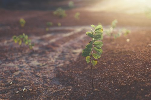 Ten by Earth Day 2021: Support Regenerative Agriculture to Restore the Planet | Earth Day