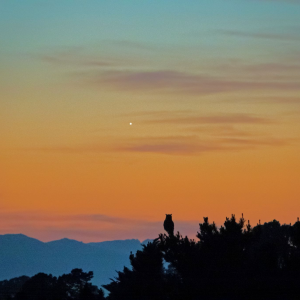 Venus and the owl, from California | EarthSky.org