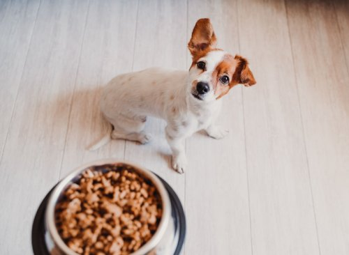 These 6 Pet Food Brands Are Being Recalled Nationwide   Eat This Not That