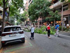 Cae un árbol en pleno Eixample y colapsa el tráfico