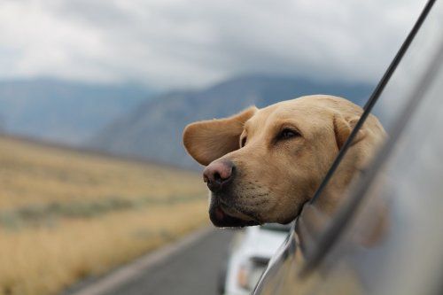How to Plan A Road Trip with Your Dog: Practical Tips - Ecophiles