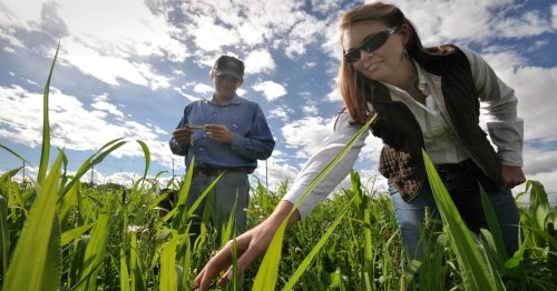 How USDA can leverage a carbon bank for farmers, foresters and the climate | Growing Returns