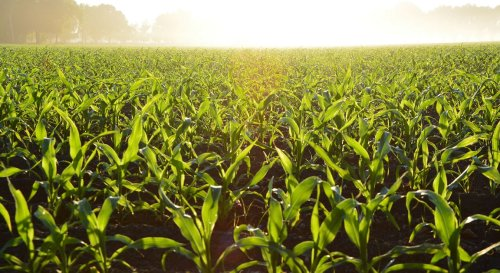 Cargill and Soil Health Institute find farmer experience with soil health pays off. Here's how. | Growing Returns
