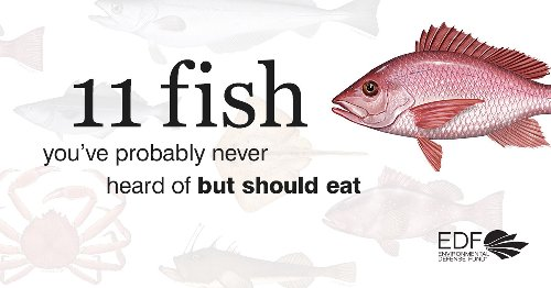 11 sustainably caught fish that taste great