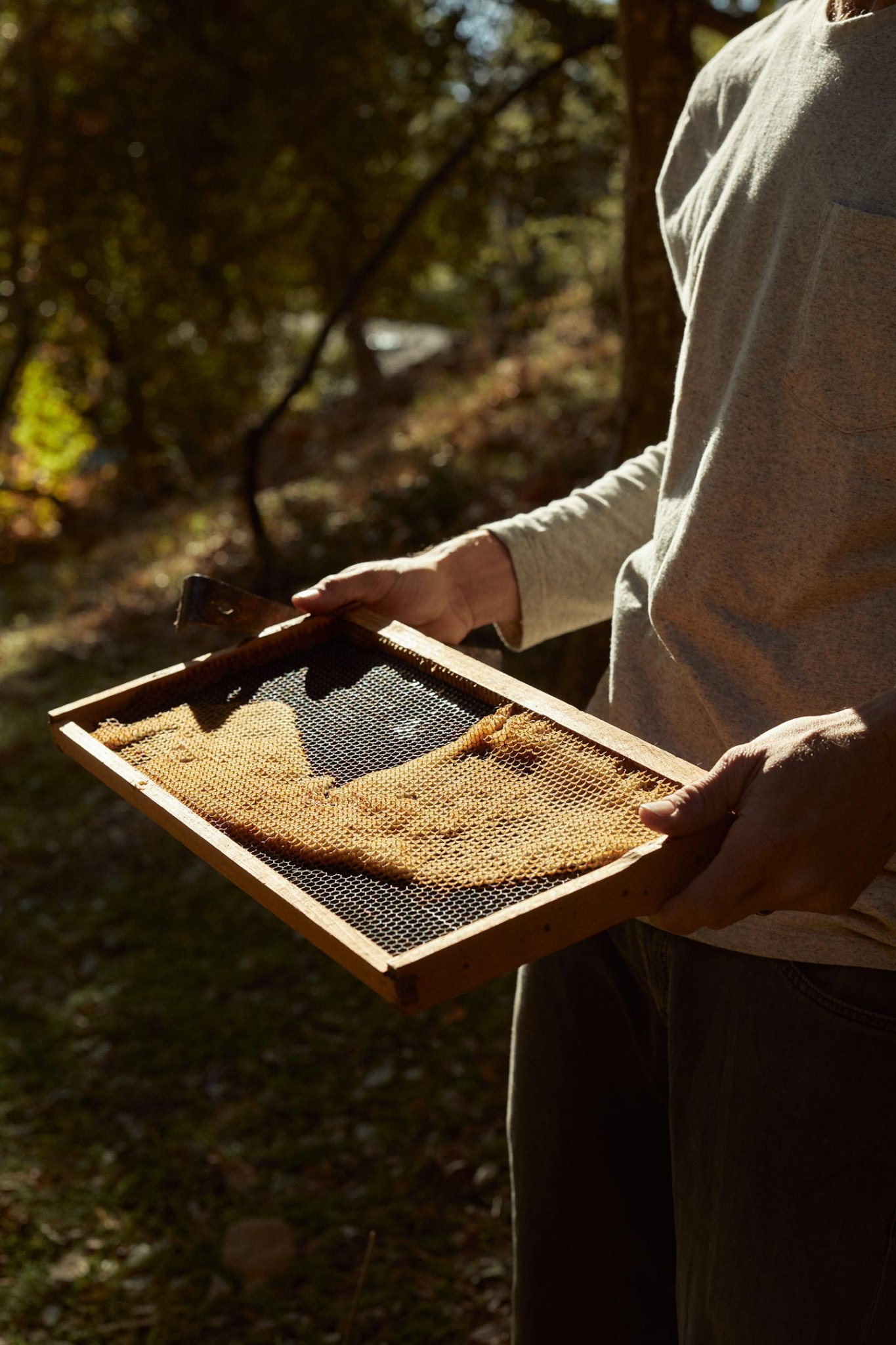 The changing environment of the Santa Monica Mountains flavors the honey of Eli's Bees. - Waves