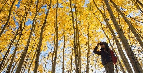 ADVOCACY: National Audubon employees move to unionize