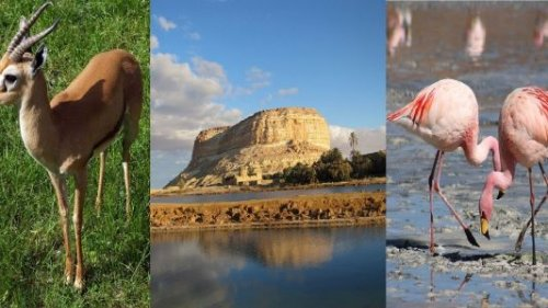 Siwa Oasis: The Land of Palm Trees, Olives, Sulphur Springs and the Best in Medical Tourism