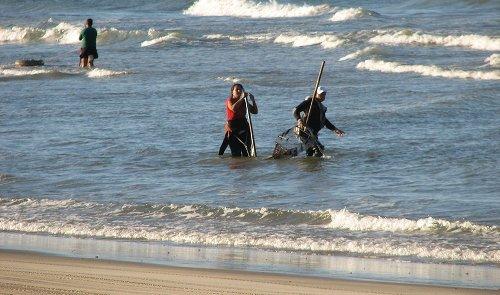 La Junta reduce a 45 días el paro biológico del marisqueo de coquina fina en el Golfo de Cádiz