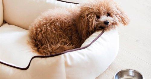 10 camas para perros (grandes y pequeños) que quedarán genial en cualquier casa y decoración