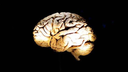 Estrategias del cerebro ante emociones desagradables: observar o huir