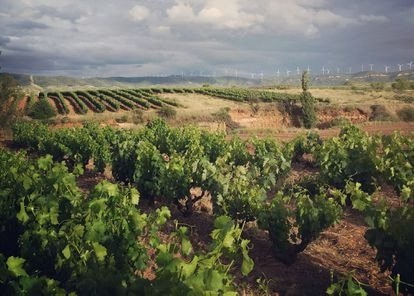 Salvemos los viñedos españoles