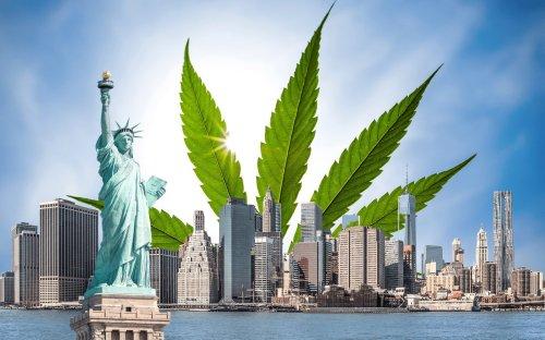 Nueva York Pronto Podría Permitir el Autocultivo de Marihuana a Pacientes