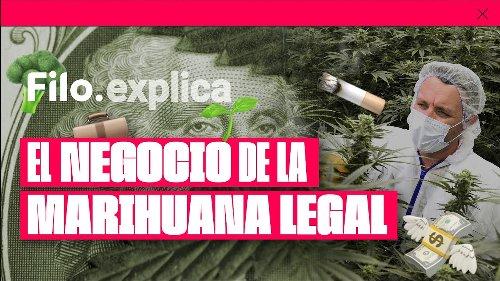 Por Qué la Marihuana Debería Ser Legal en Argentina, según Filo News