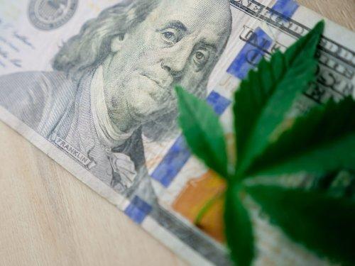 Industria del Cannabis: Aumentan los Salarios y la Demanda de Talentos