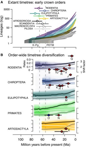 Molecules and fossils tell distinct yet complementary stories of mammal diversification