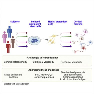 Balancing serendipity and reproducibility: Pluripotent stem cells as experimental systems for intellectual and developmental disorders